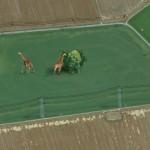 Výběh pro žirafy